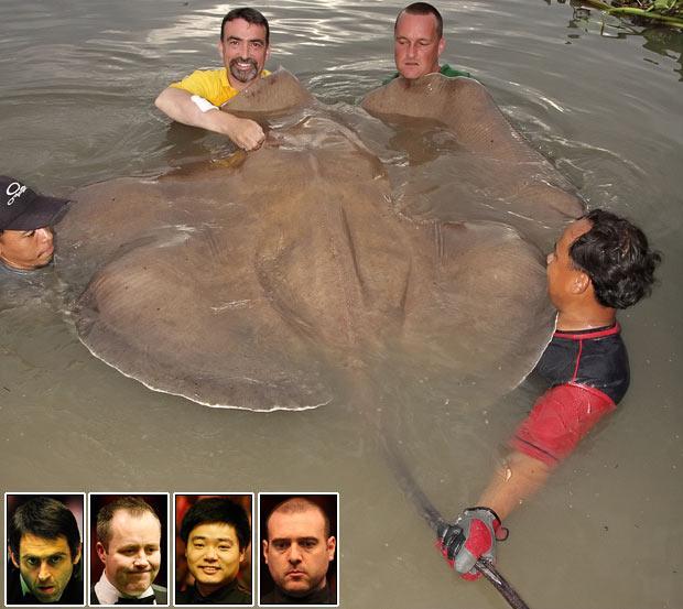 Ian Welch dzeltens krekls... Autors: bizonis1 Lielas zivis = Slavenības