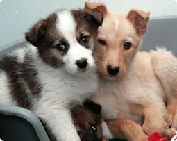 Cik mīlīgi suņuki Autors: kiss Par sunīšiem! (raksts)