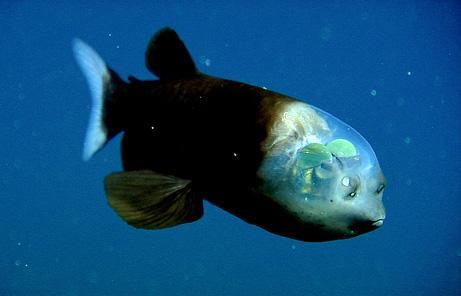 2 atrasta pirmā zivs ar... Autors: chesterfields top 10 atklājumi 2009. gadā
