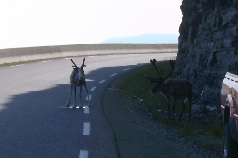 Uz ceļiem jābūt sevišķi... Autors: aivarsm Manas atmiņas par Skandināviju
