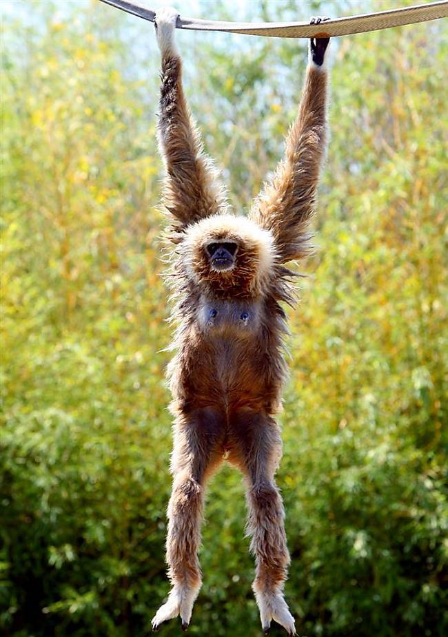Dzīvnieciņa vārds Micha vecums... Autors: KingOfTheSpokiLand 75 Pārsteidzošas dzīvnieku fotogrāfijas!