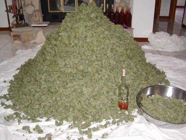 Autors: Azazello Kas īsti ir marihuāna?