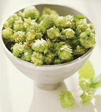 Apiņi  ir daudzgadējs augs kas... Autors: eziiiC Pamācība: Kā pagatavot alu?