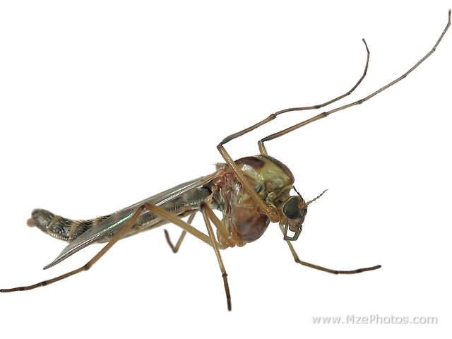 Miljonam izsalkušu odu būtu... Autors: Kefirs Vai zini, ka...Daļa Nr.2