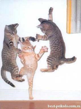 Autors: Nefiltrētais smiekliīgas bildes labai noskaņai!