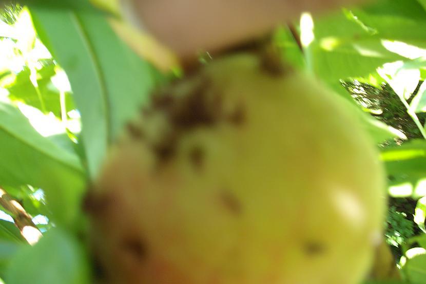 Autors: miilumins Sargajiet savu persikus !!!!!!!