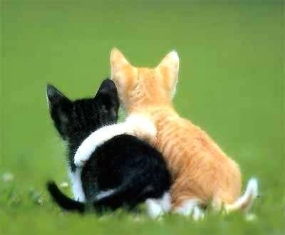 Kaķiem deguna virsmas... Autors: Fosilija Fakti par kaķiem.