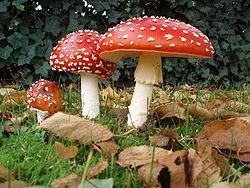 Sēž mežā divas sēnes mušmire... Autors: Fosilija Anekdotes!