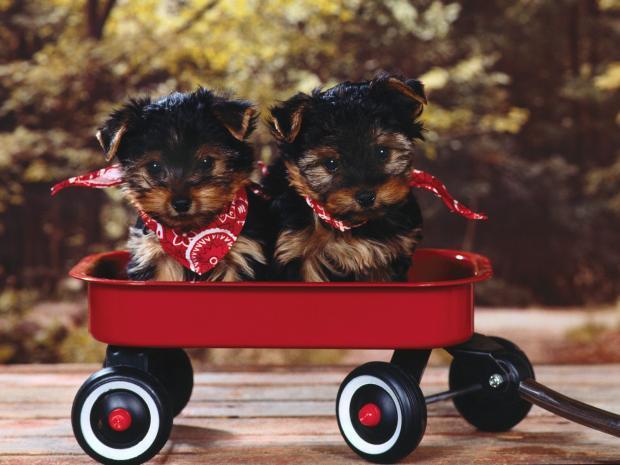 Bībelē suņi ir pieminēti 14... Autors: Evuxi Fakti par suņiem.