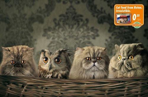 Kaķu barības reklāma Autors: MataHari Kreatīvas reklāmas!