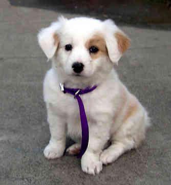 Autors: zakjeens9 17 iemesli, kāpēc labāk būt sunim