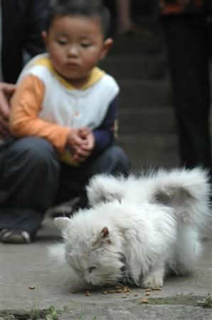 Otrs izskaidrojums ziņojumiem... Autors: sviestapika Spārnoti kaķīši