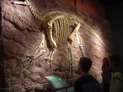 Fosilijas ir to augu vai... Autors: MONTANNA Daži Fakti
