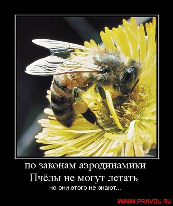 Pēc aerodinamikas likuma... Autors: Parādi PuPus DemotivĀtorīīī***