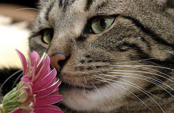 Ja evolūcijas likumi pastāv... Autors: Fosilija Mūsu mīļie kaķi 2.daļa