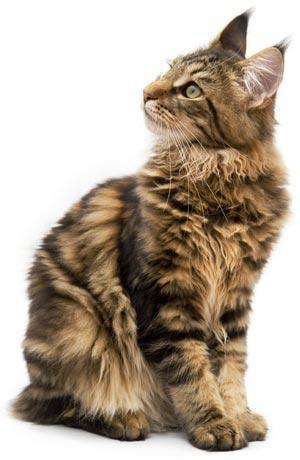 Kad es kļūšu vecāka es ķeršu... Autors: Fosilija Mūsu mīļie kaķi 2.daļa