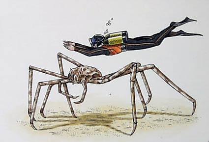 Macrocheira kaempferi jeb... Autors: Fosilija Daži krutākie bezmugurkaulinieki