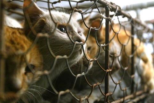 Ķīniešu dzīvnieku tiesību... Autors: Shanta Tiek glābti dzīvnieki Ķīnā un Japānā..