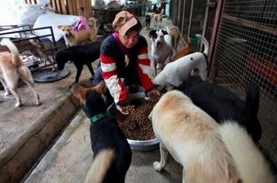 Tiek piegādāts pie 1000 kg... Autors: Shanta Tiek glābti dzīvnieki Ķīnā un Japānā..