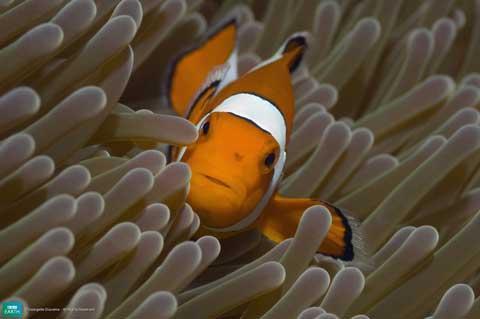 7KlaunzivsKlaunzivij ir ļoti... Autors: Katchibaba Top 10 dabas visinteresantāk izkrāsotie dzīvnieki