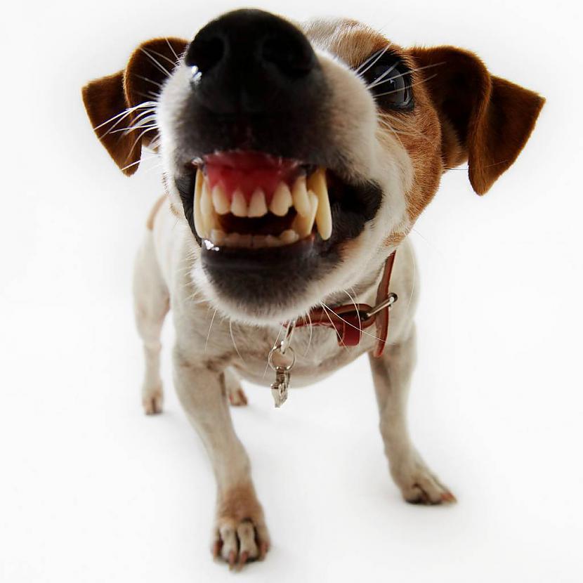 Kāpēc paņemot mājās suni tas... Autors: Tavs Sencis Apmācība - kā suns ar prieku sapratīs to, ko vēlas saim