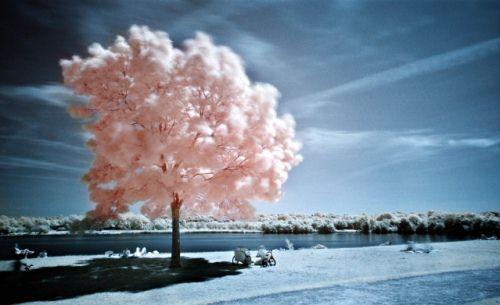 Steve Castle Autors: jankabanka Neticami infrasarkanās fotogrāfijas paraugi.