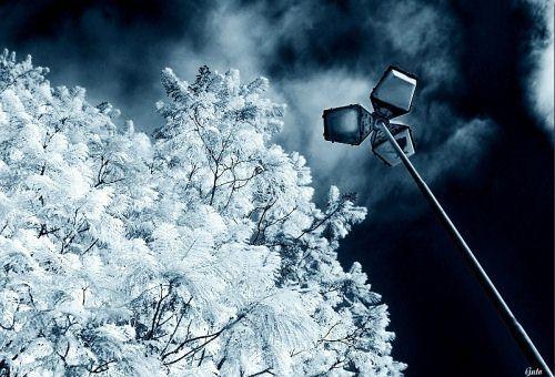 Guto Autors: jankabanka Neticami infrasarkanās fotogrāfijas paraugi.
