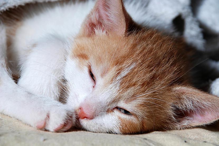Mīksti un silti  Autors: Ungus Kaķu stāsts bildēs