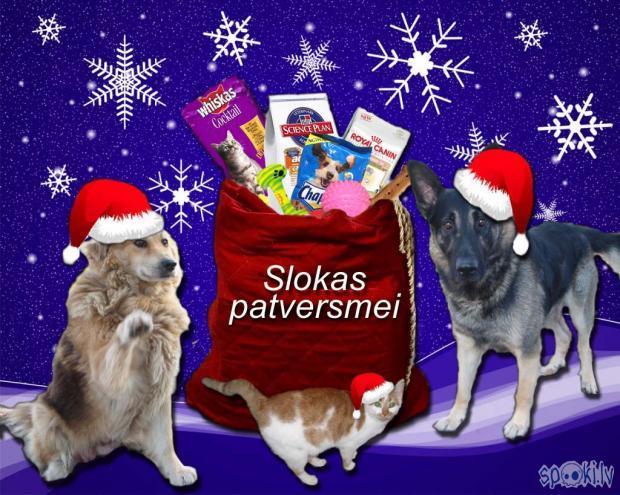 Autors: bellydancer Sagādāsim Ziemassvētkus Slokas dzīvnieku patversmē!!!
