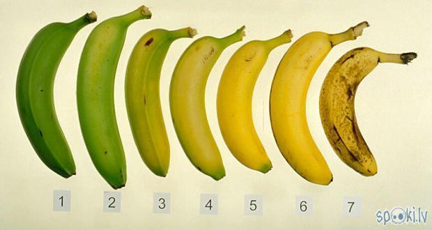 Autors: aixa2 Banāni
