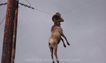 Redzējām kazu tā karājās vados... Autors: nauruha parasta exkursija