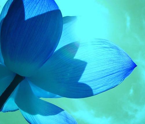 Tumši zilā krāsa labi... Autors: Mijolite Krasas. Zila.