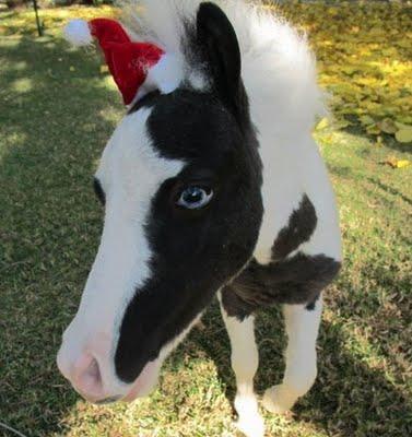 Autors: MaxWell06 Einšteins - Pasaulē mazākais zirgs.