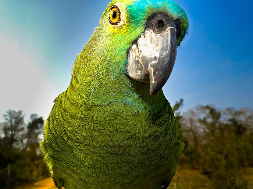Papagaiļi galvenokārt apdzīvo... Autors: samepersonsamesmile Something beautiful.