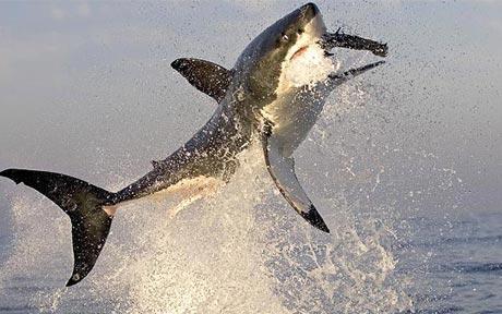 Haizivs ir vienīgā zivs kas... Autors: Ļaunā minka Nedzirdēti fakti.