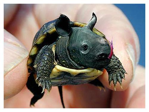 bruņuradzis Autors: Fosilija mutantiskie dzīvnieki