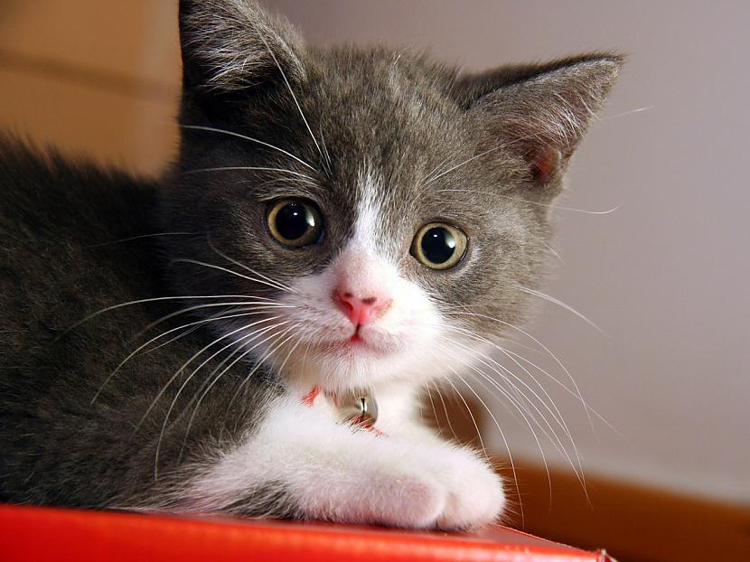Murrāšana palīdz kaķim... Autors: ML Neticami, bet fakts - 3