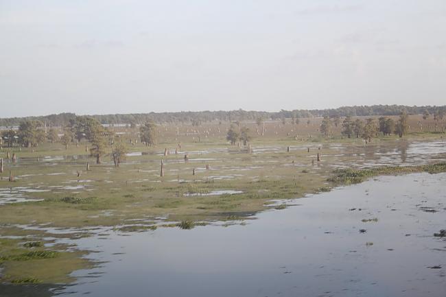 Louisiana katru gadu zaudē ap... Autors: Fosilija Fakti Par Pasauli