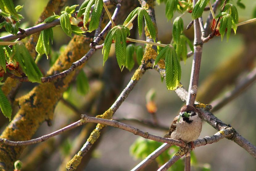 Modinātājs pavasara rītos Autors: fotostudente Mirklis iedvesmas 2