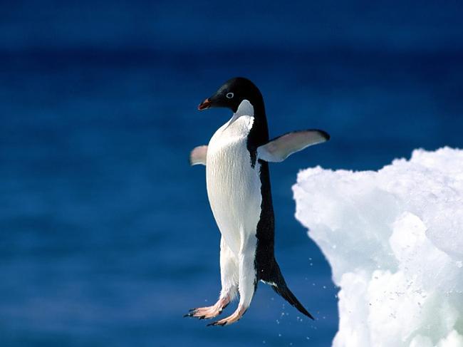 nbsp4 Pingvīnu grozītājs... Autors: knift 13 dīvainākās profesijas