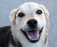 6 Pieaugušam sunim ir 42 zobi Autors: Sidža Suņuki!