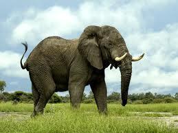 Zilonis ir vienīgais dzīvnieks... Autors: Fosilija Fakti par dzīvniekiem