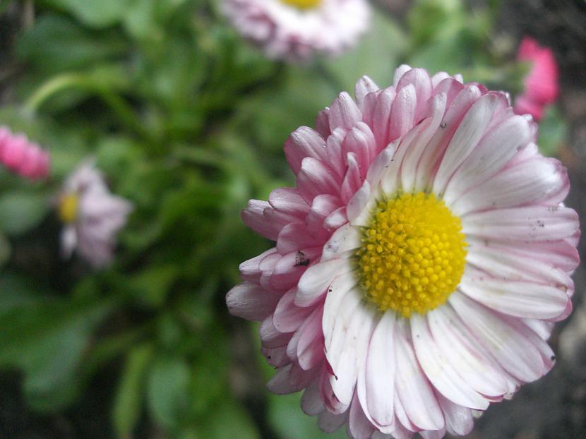 Autors: anely4 Dārzā