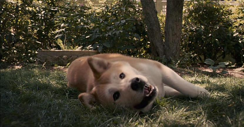 Hatiko protams par to nezināja... Autors: CrazyMaineCoonLover Hachiko: The World's Most Loyal Dog