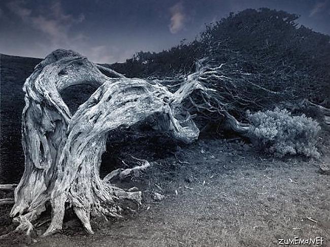 Autors: Kaimiņiene KM Baisie koki .