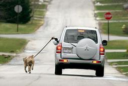 Mašīnas veids Domāts cilvēkiem... Autors: smileDD 5 veidi kā izstaidzināt suni.