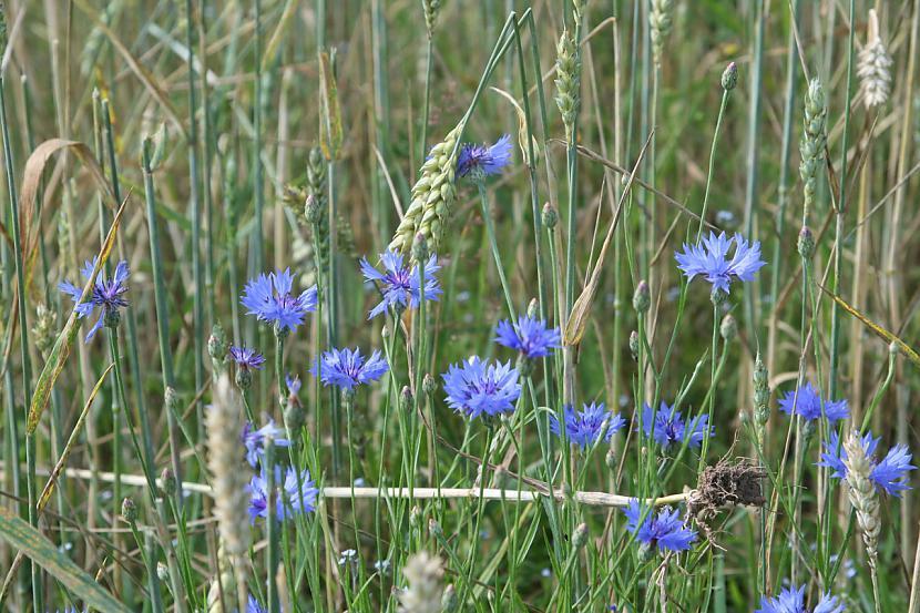 Ziedu laukā gulēt un skatīties... Autors: MINKA321 VASARA - mēs TEVI gaidam!
