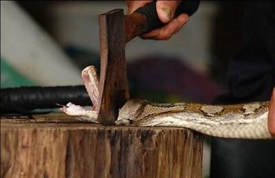 Šādā veidā pitoni var kļūt par... Autors: Asiņainā Mērija Čūskādas somiņas taisīšana.