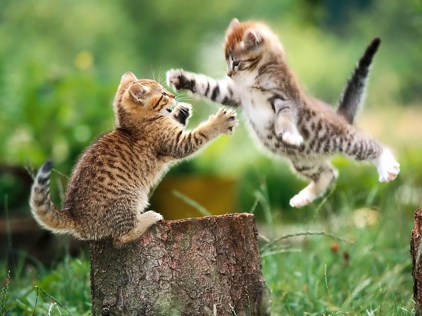 Autors: Asiņainā Mērija Fakti par kaķiem...