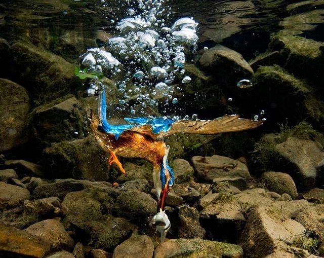 Autors: GunneDHD Forši atēli no dzivnieku pasaules...